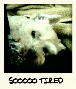 soooo tired